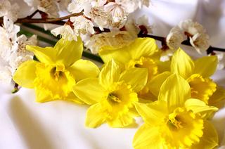 Ассоциация выпускников ТУСУРа поздравляет юбиляров мая